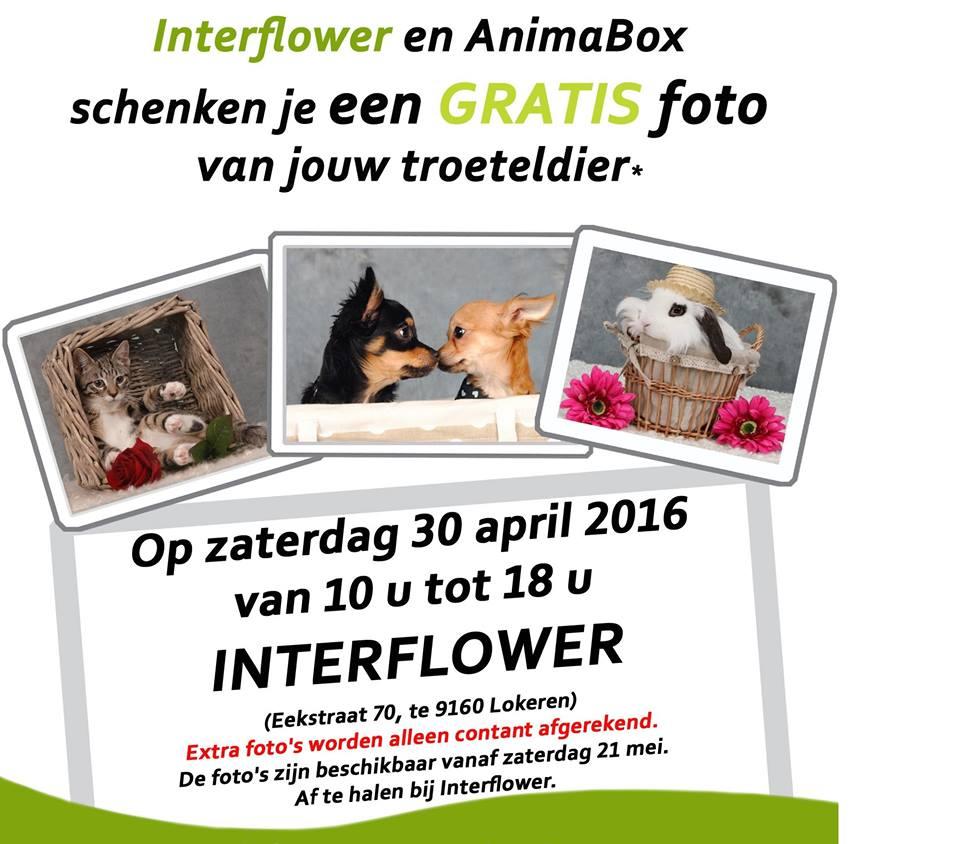 Kom op 30 april langs bij tuincentrum Interfower en krijg een gratis foto van uw huisdier