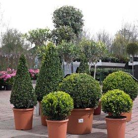 Planten lokeren