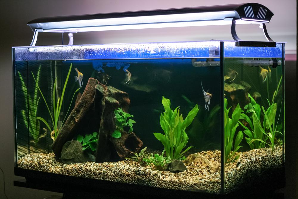 Aquarium verlichting - Tuincentrum Interflower