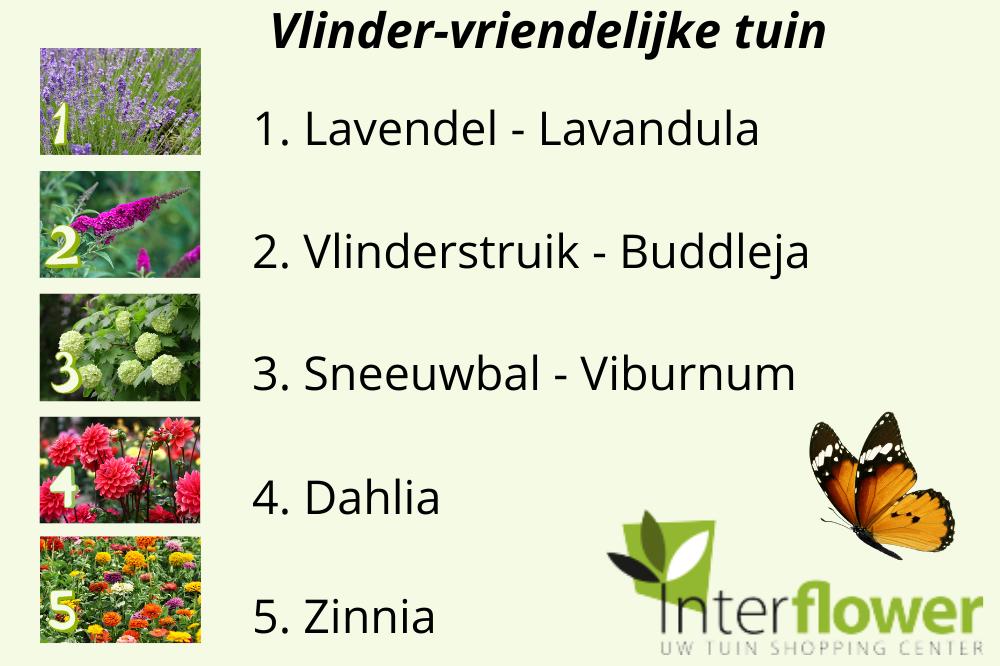 Bij-vriendelijke tuin - Interflower