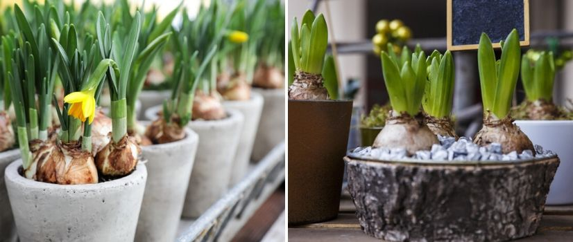 Bloemen op pot - Interflower