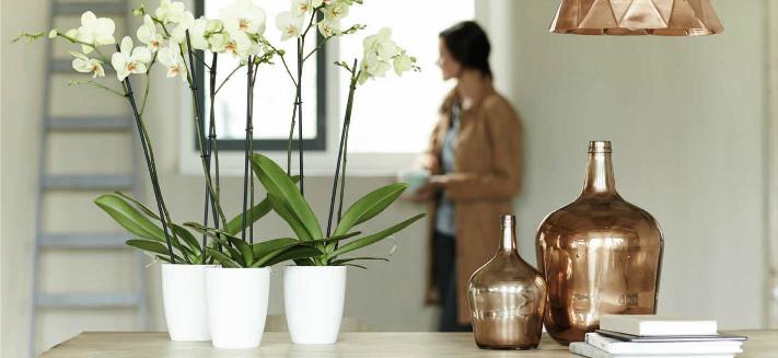 Elho bloempotten en plantenbakken voor binnen kopen in Lokeren