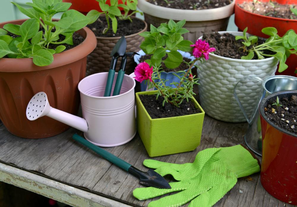 Kweken kweektafel kweekbakken - Tuincentrum Interflower