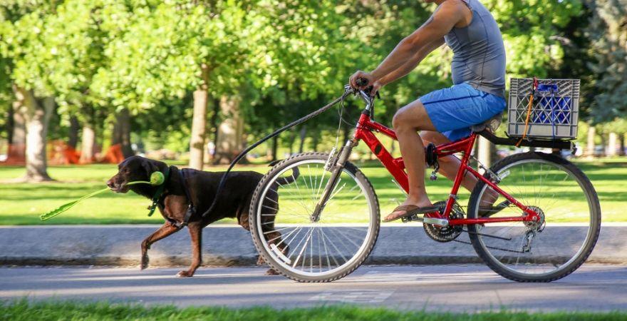 Hondenriemen & halsbanden_Interflower