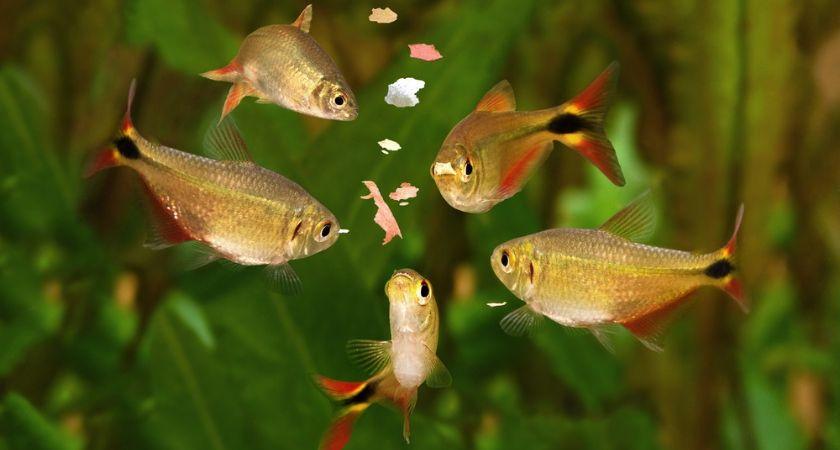 Vissenvoer_Tuincentrum Interflower