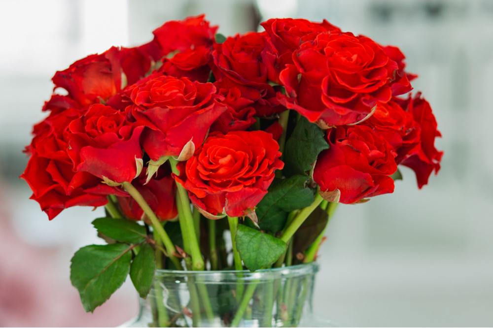 Rode roos - Interflower