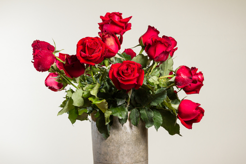 Snijbloemen rode rozen - Interflower
