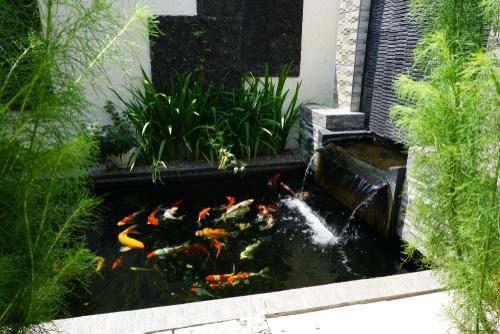 Waterval vijver - Interflower