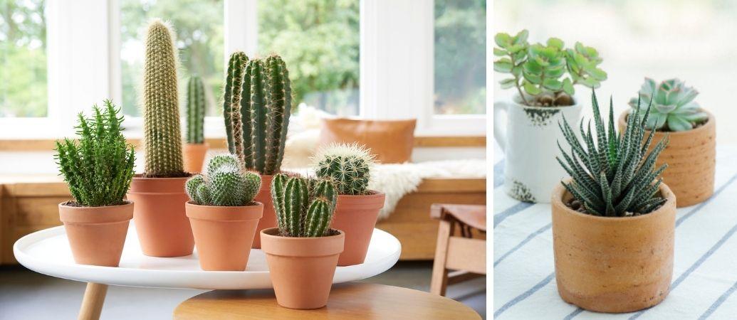 Tuincentrum Interflower | Cactussen en vetplanten