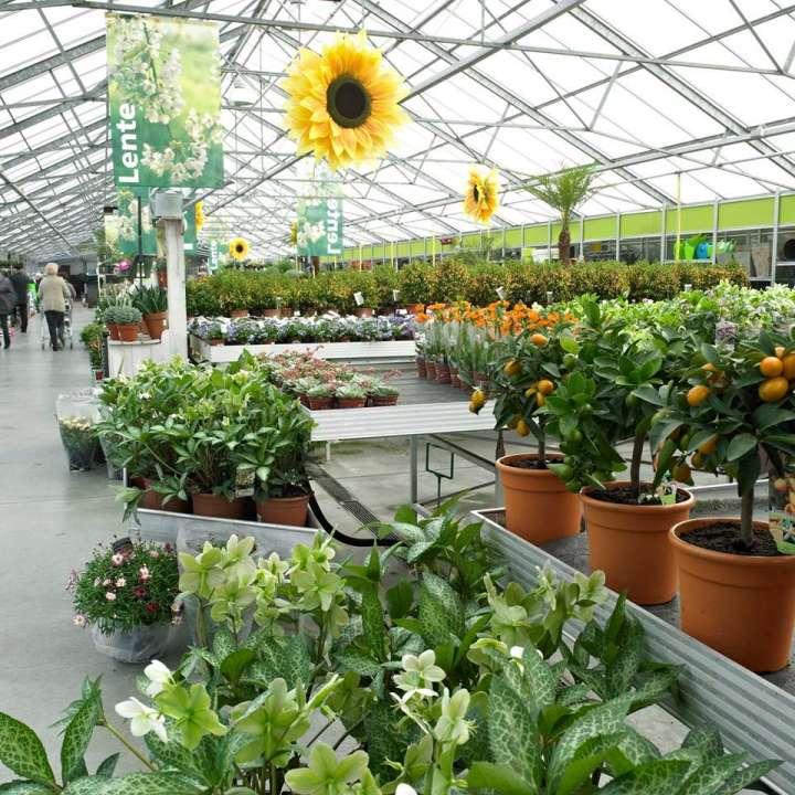 Tuinplanten - Interflower