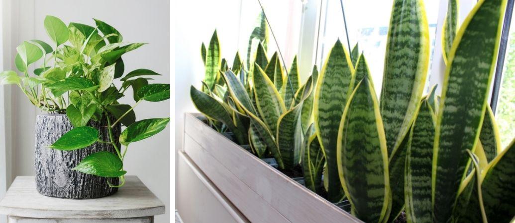 Tuincentrum Interflower | Groene kamerplanten