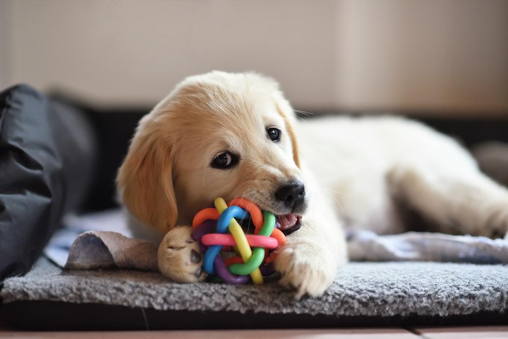 hondenspeelgoed-kopen-lokeren