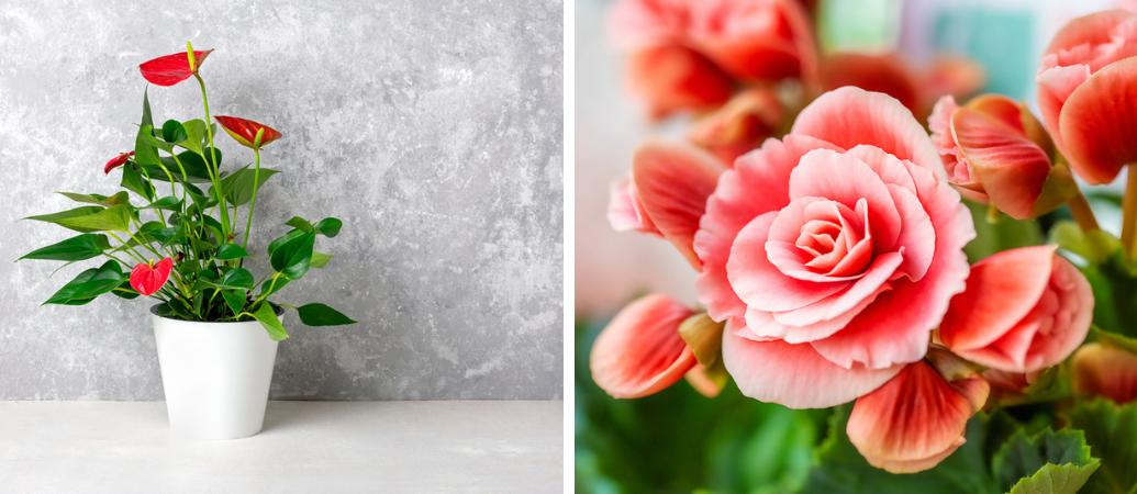 Tuincentrum Interflower | Bloeiende kamerplanten