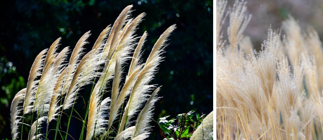 Tuincentrum Interflower | Siergrassen | Siergrassen snoeien
