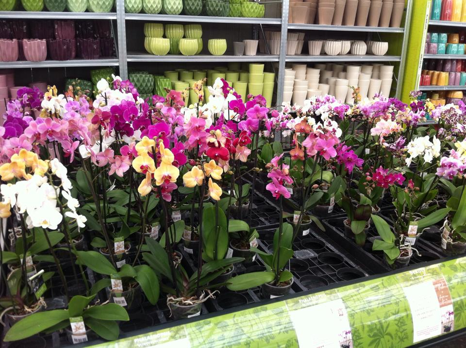 Kamerplanten kopen in Gent