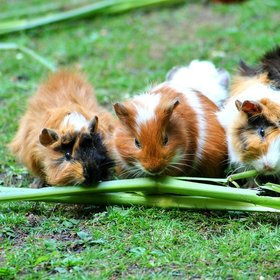 Ontdek de complete dierenwinkel van Interflower in de buurt van Gent!