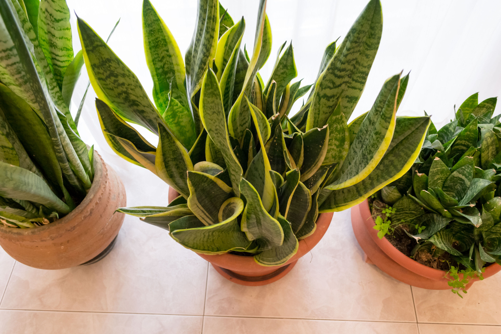 Fabulous Ontdek veel planten in de regio van Gent - Tuincentrum Interflower @EU77