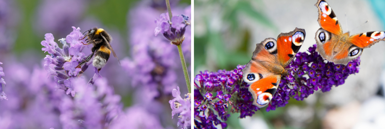 Tuincentrum Interflower   Lokeren   Tegels eruit! Welke planten erin?